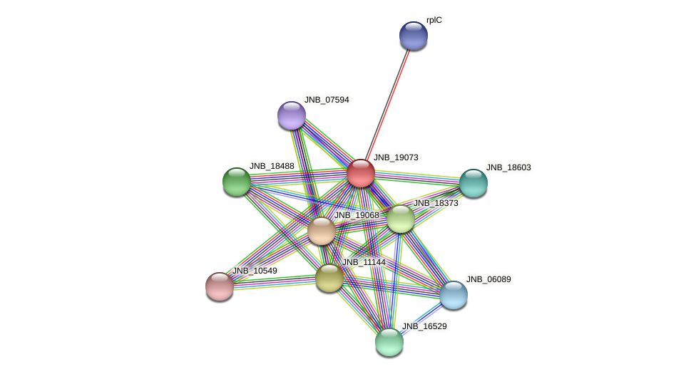JNB_19073 protein (Janibacter sp. HTCC2649) - STRING interaction network