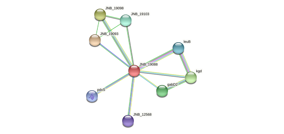 JNB_19088 protein (Janibacter sp. HTCC2649) - STRING interaction network