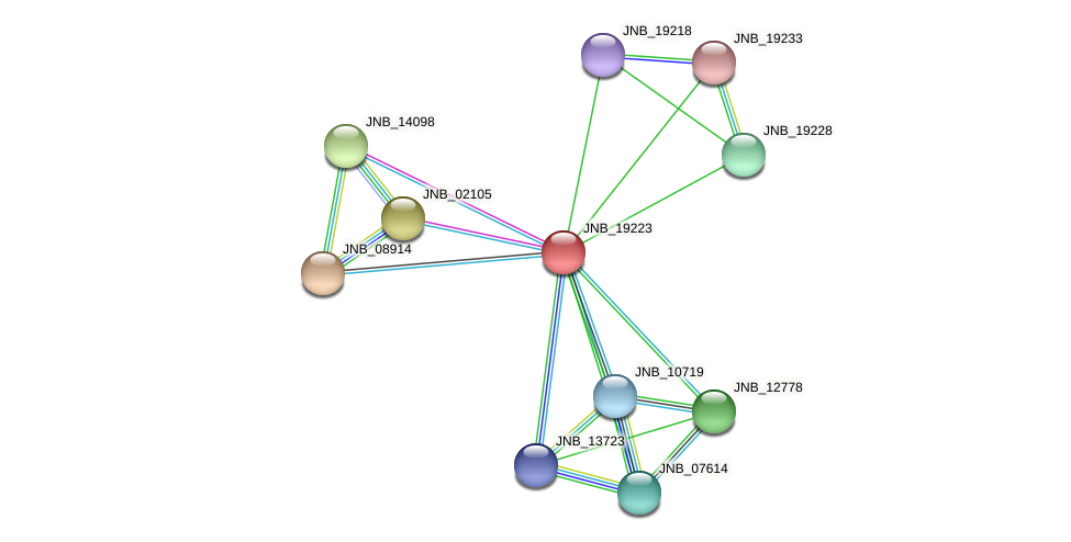 JNB_19223 protein (Janibacter sp. HTCC2649) - STRING interaction network