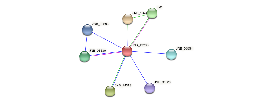 JNB_19238 protein (Janibacter sp. HTCC2649) - STRING interaction network