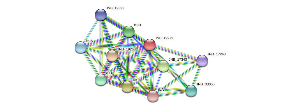 JNB_19273 protein (Janibacter sp. HTCC2649) - STRING interaction network