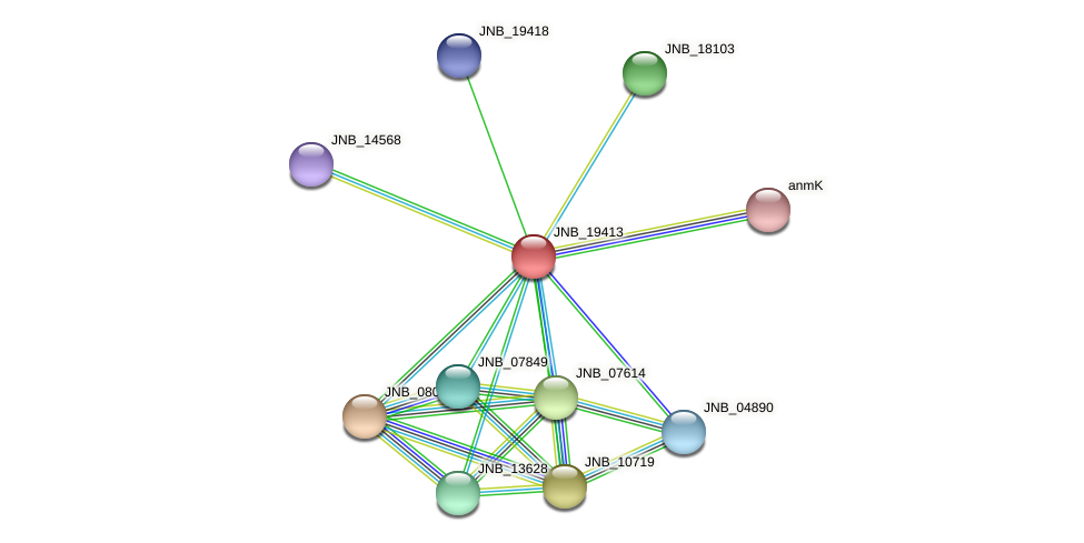 JNB_19413 protein (Janibacter sp. HTCC2649) - STRING interaction network