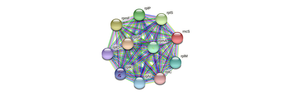 rnc protein (Janibacter sp. HTCC2649) - STRING interaction network