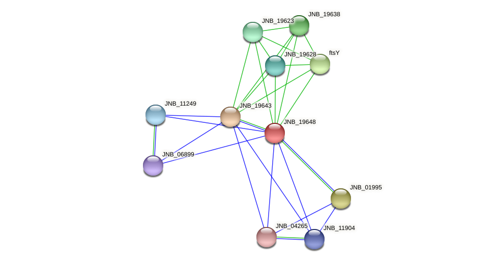 JNB_19648 protein (Janibacter sp. HTCC2649) - STRING interaction network