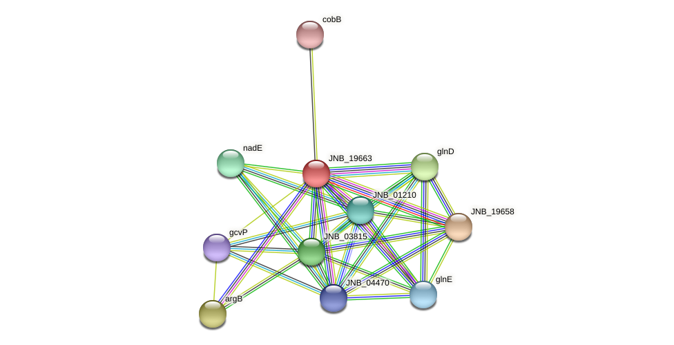 JNB_19663 protein (Janibacter sp. HTCC2649) - STRING interaction network