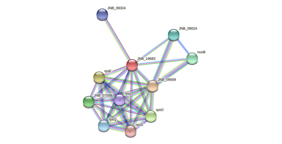 JNB_19683 protein (Janibacter sp. HTCC2649) - STRING interaction network
