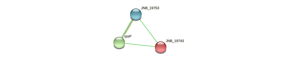 JNB_19743 protein (Janibacter sp. HTCC2649) - STRING interaction network