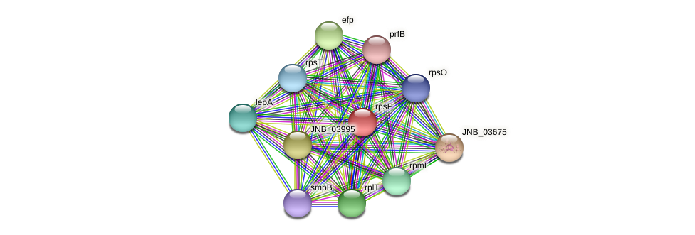 rpsP protein (Janibacter sp. HTCC2649) - STRING interaction network