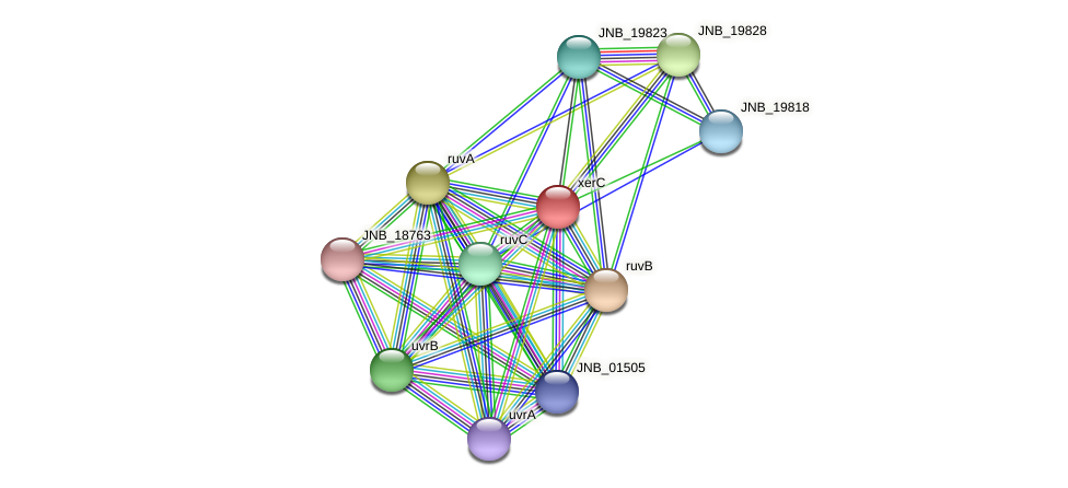 xerC protein (Janibacter sp. HTCC2649) - STRING interaction network