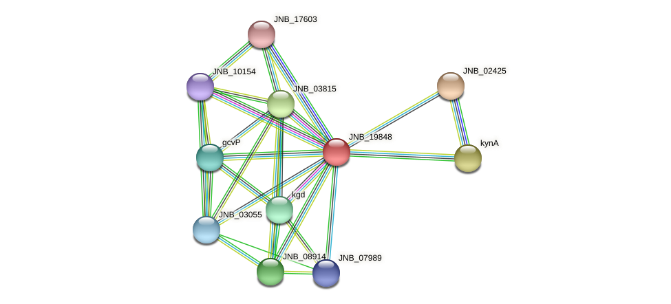 JNB_19848 protein (Janibacter sp. HTCC2649) - STRING interaction network