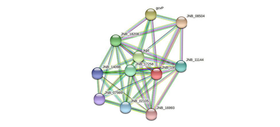 JNB_19943 protein (Janibacter sp. HTCC2649) - STRING interaction network