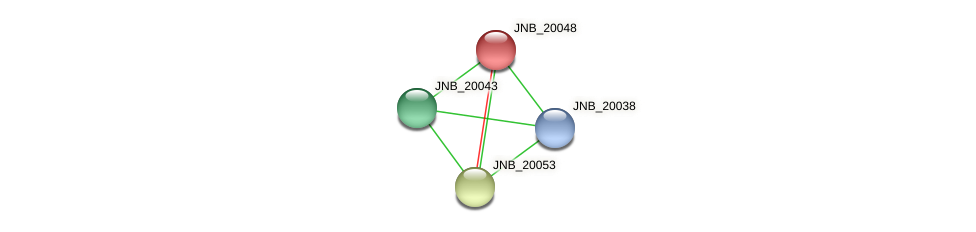 JNB_20048 protein (Janibacter sp. HTCC2649) - STRING interaction network