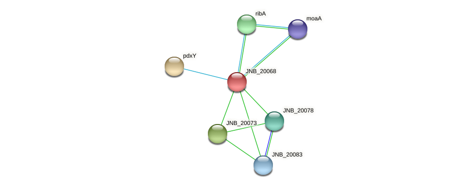 JNB_20068 protein (Janibacter sp. HTCC2649) - STRING interaction network