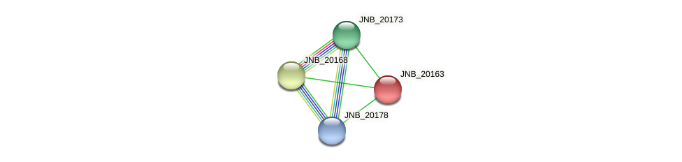 JNB_20163 protein (Janibacter sp. HTCC2649) - STRING interaction network