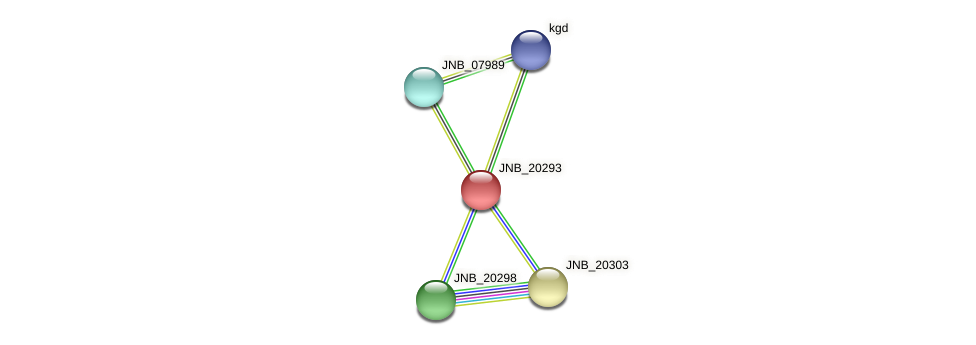 JNB_20293 protein (Janibacter sp. HTCC2649) - STRING interaction network