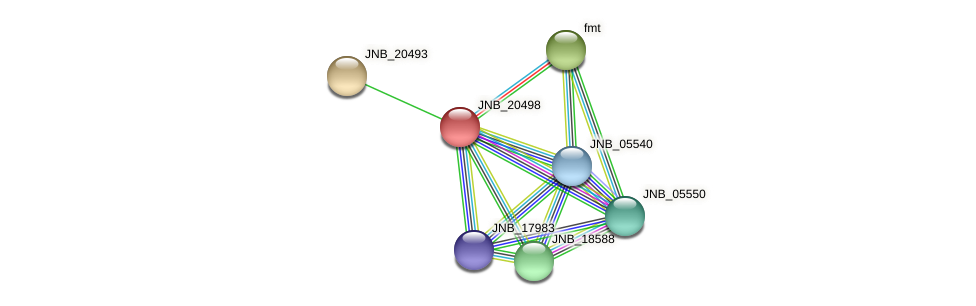 JNB_20498 protein (Janibacter sp. HTCC2649) - STRING interaction network
