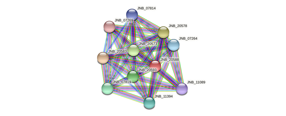 JNB_20588 protein (Janibacter sp. HTCC2649) - STRING interaction network