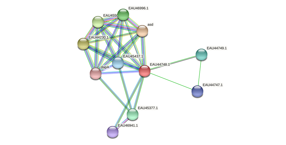 R2601_00025 protein (Pelagibaca bermudensis) - STRING interaction network