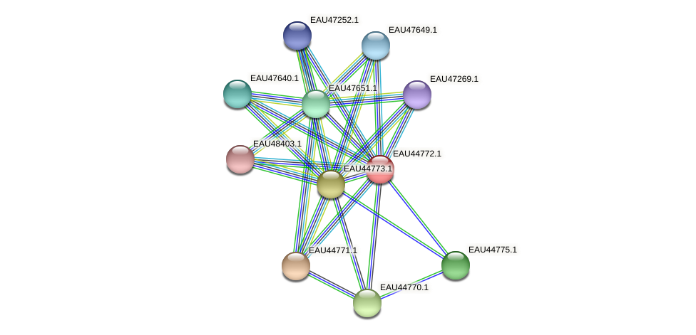 R2601_00145 protein (Pelagibaca bermudensis) - STRING interaction network