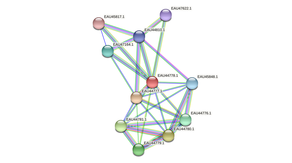 R2601_00175 protein (Pelagibaca bermudensis) - STRING interaction network