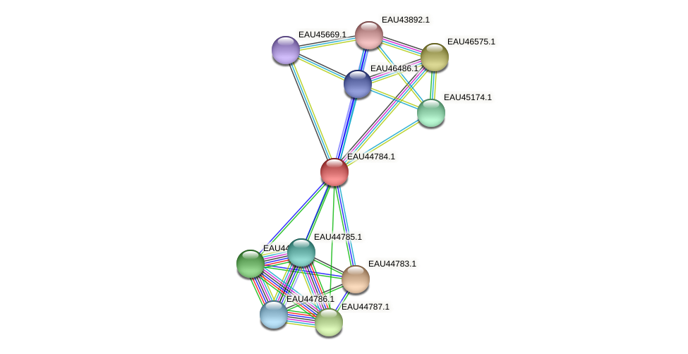 R2601_00205 protein (Pelagibaca bermudensis) - STRING interaction network