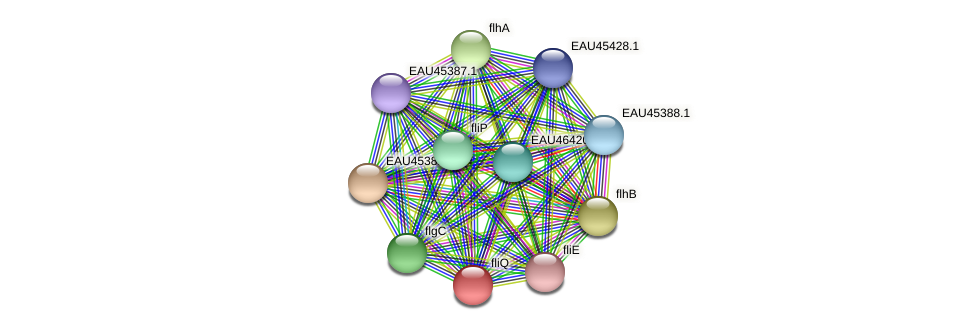 fliQ protein (Pelagibaca bermudensis) - STRING interaction network