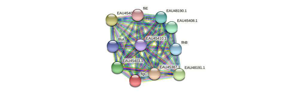 flgC protein (Pelagibaca bermudensis) - STRING interaction network