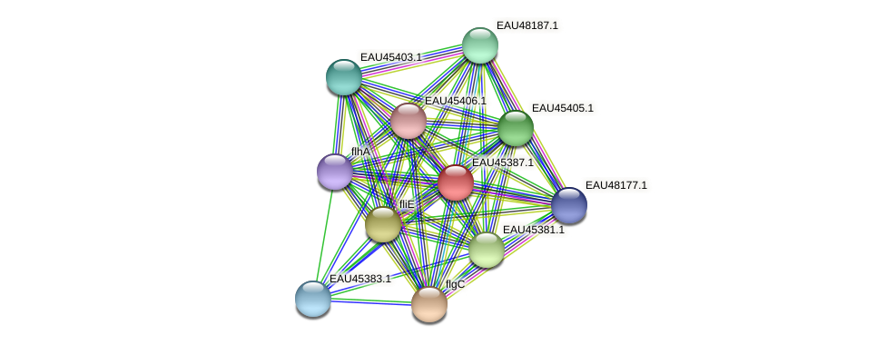 R2601_00305 protein (Pelagibaca bermudensis) - STRING interaction network