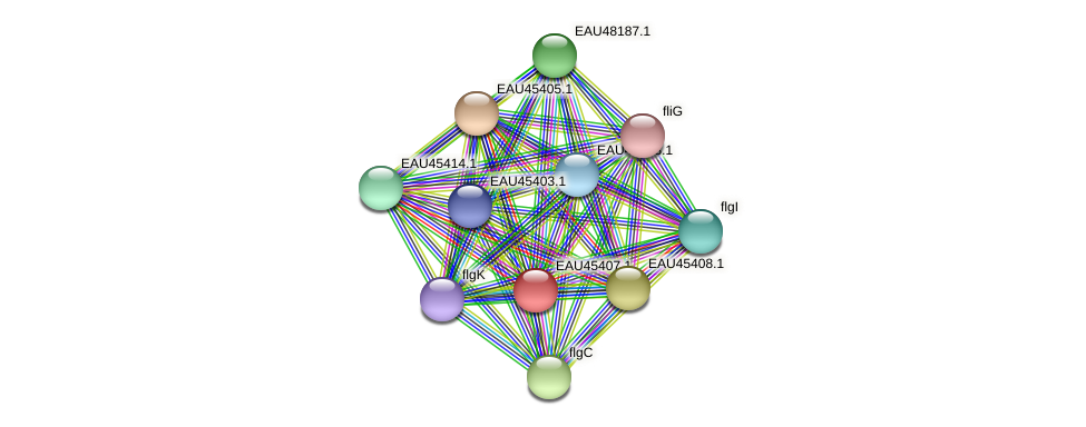 R2601_00405 protein (Pelagibaca bermudensis) - STRING interaction network