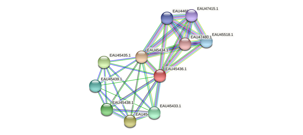 R2601_00550 protein (Pelagibaca bermudensis) - STRING interaction network
