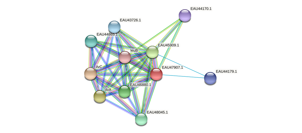 R2601_00670 protein (Pelagibaca bermudensis) - STRING interaction network
