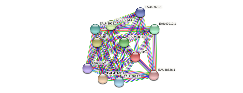 R2601_00710 protein (Pelagibaca bermudensis) - STRING interaction network