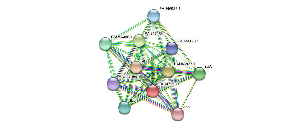 R2601_00900 protein (Pelagibaca bermudensis) - STRING interaction network