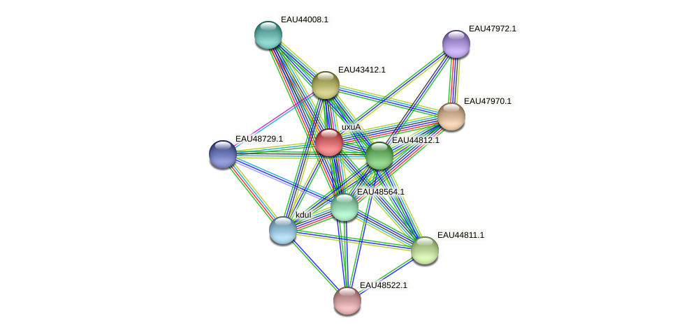 uxuA protein (Pelagibaca bermudensis) - STRING interaction network