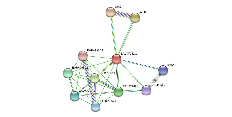 R2601_01040 protein (Pelagibaca bermudensis) - STRING interaction network