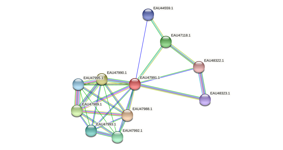 R2601_01090 protein (Pelagibaca bermudensis) - STRING interaction network