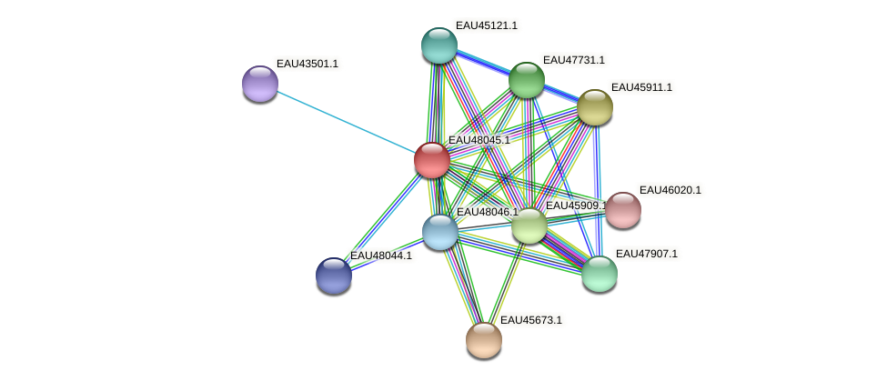 R2601_01360 protein (Pelagibaca bermudensis) - STRING interaction network