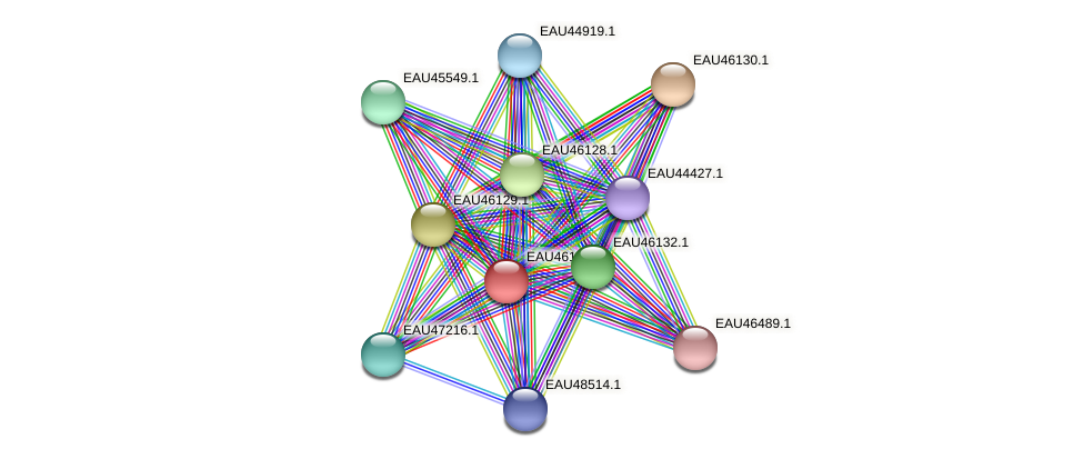 R2601_01498 protein (Pelagibaca bermudensis) - STRING interaction network