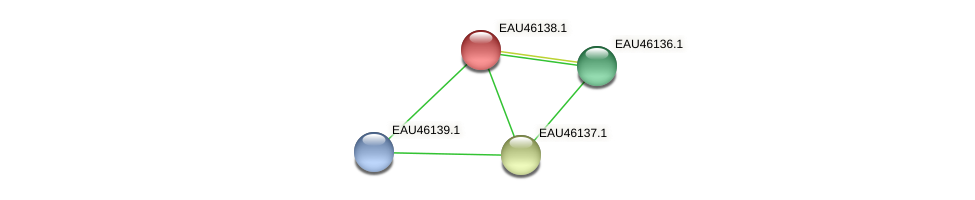 R2601_01533 protein (Pelagibaca bermudensis) - STRING interaction network