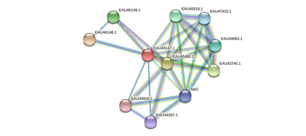 R2601_01578 protein (Pelagibaca bermudensis) - STRING interaction network