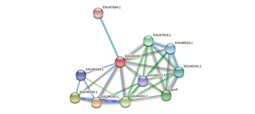R2601_01643 protein (Pelagibaca bermudensis) - STRING interaction network