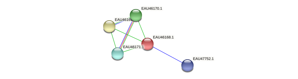 R2601_01683 protein (Pelagibaca bermudensis) - STRING interaction network