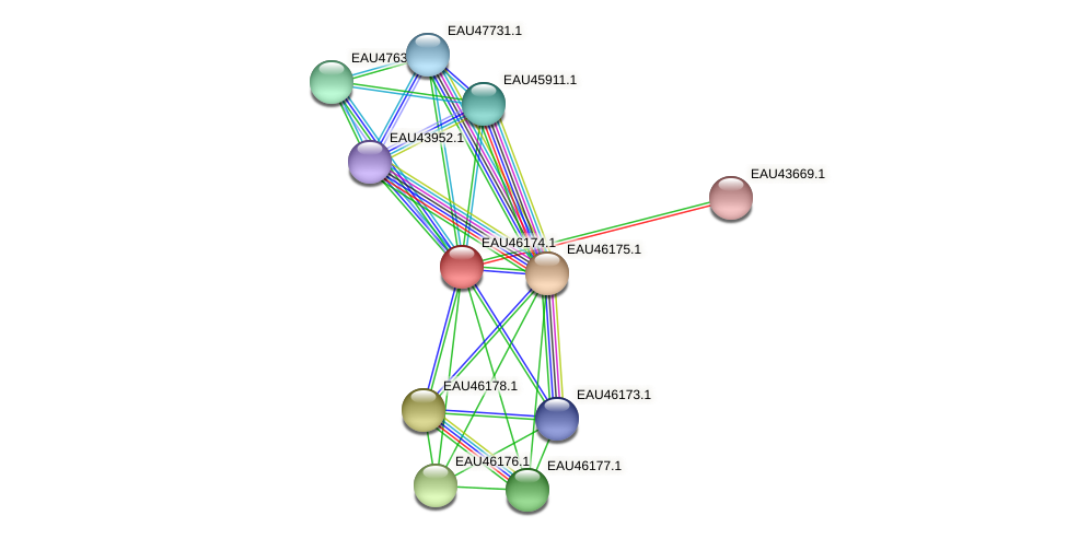 R2601_01713 protein (Pelagibaca bermudensis) - STRING interaction network