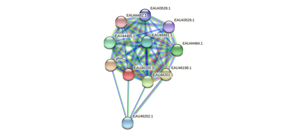 R2601_01843 protein (Pelagibaca bermudensis) - STRING interaction network