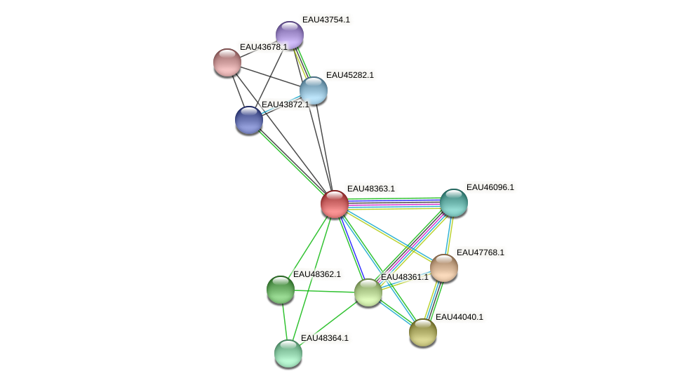 R2601_02283 protein (Pelagibaca bermudensis) - STRING interaction network