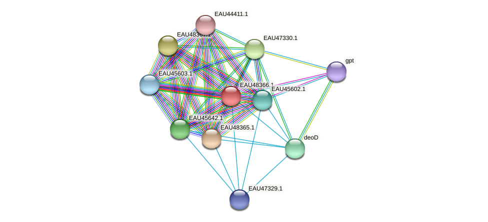 R2601_02298 protein (Pelagibaca bermudensis) - STRING interaction network