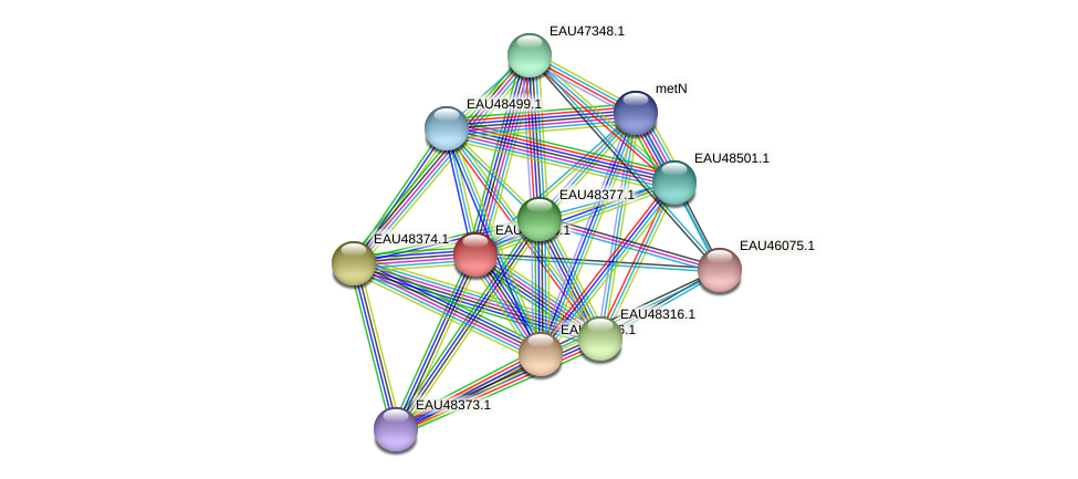 R2601_02343 protein (Pelagibaca bermudensis) - STRING interaction network