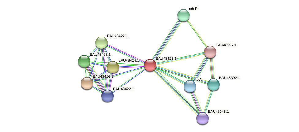 R2601_02593 protein (Pelagibaca bermudensis) - STRING interaction network