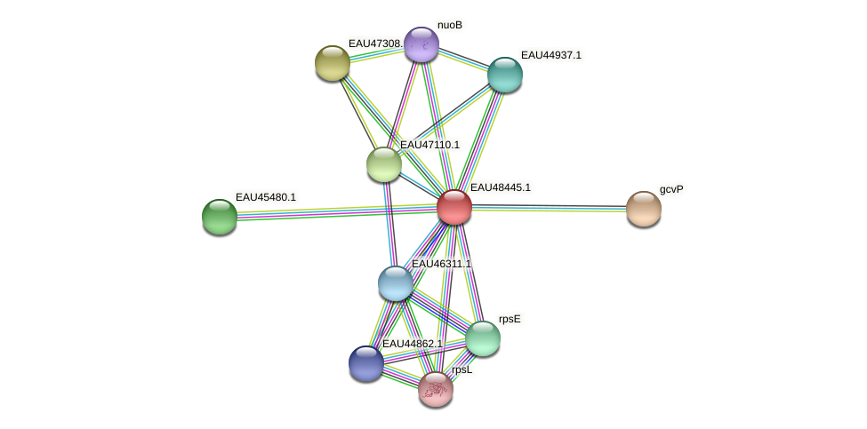 R2601_02693 protein (Pelagibaca bermudensis) - STRING interaction network