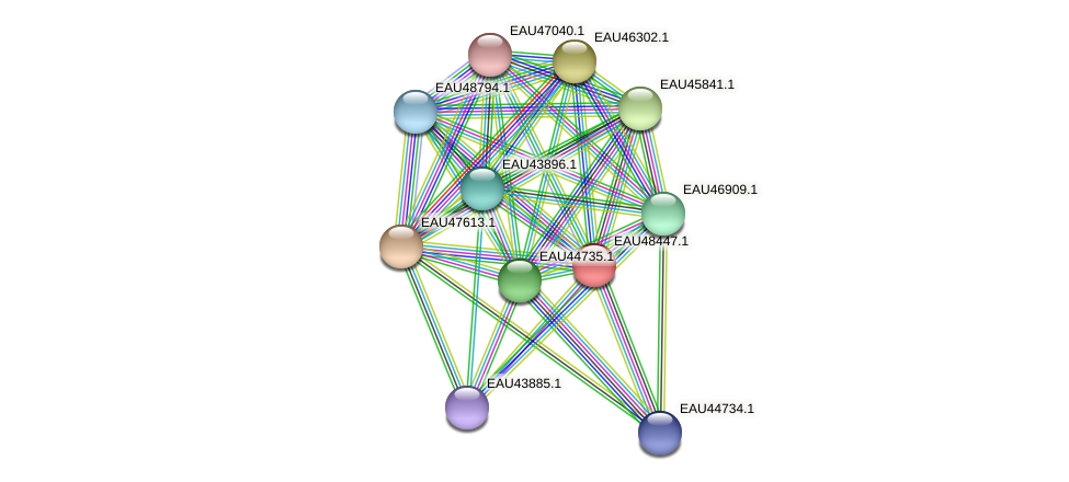 R2601_02703 protein (Pelagibaca bermudensis) - STRING interaction network